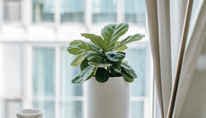 green plant in pot on windowsill at home